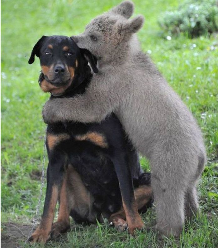 hugging_animals_02