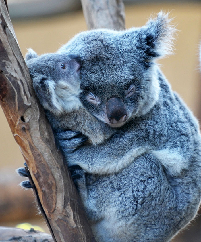 hugging_animals_03