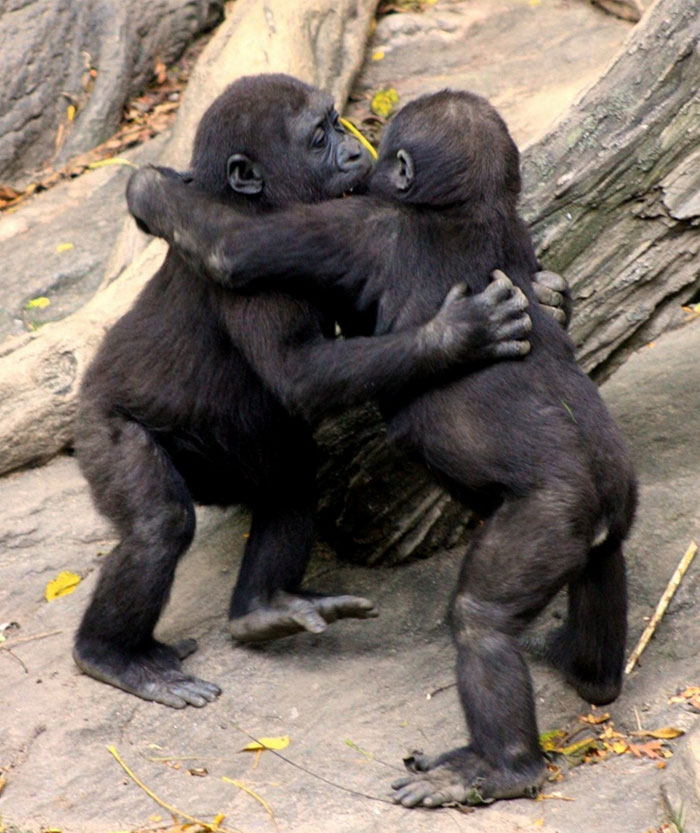 hugging_animals_04