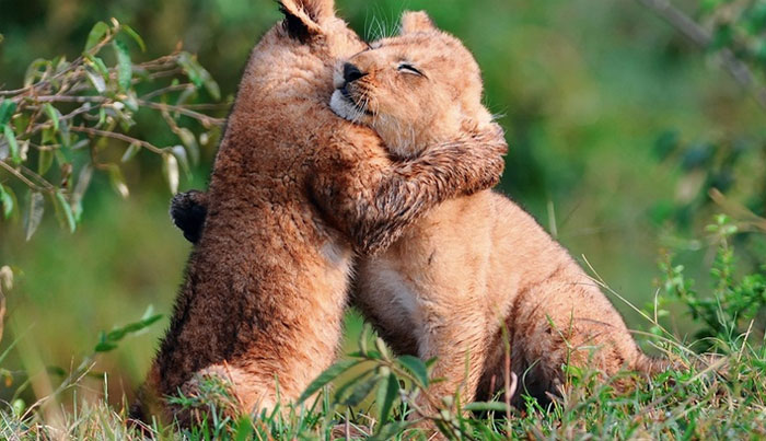hugging_animals_11