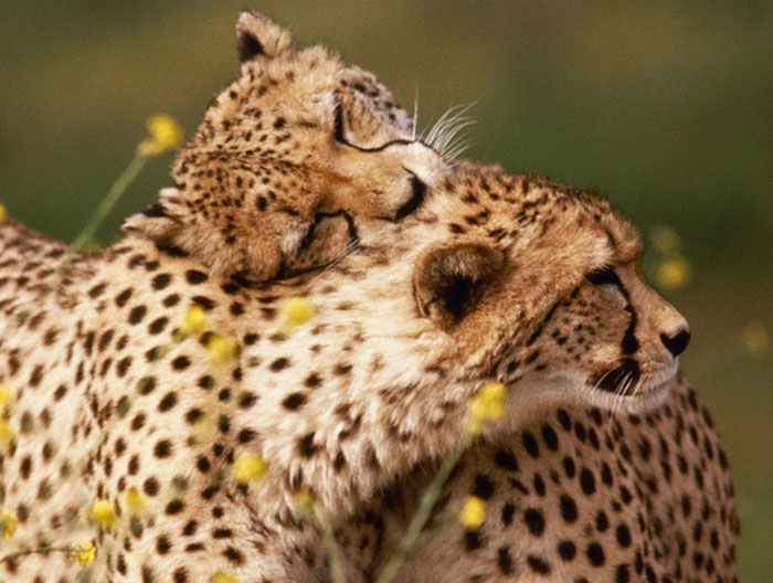 hugging_animals_13