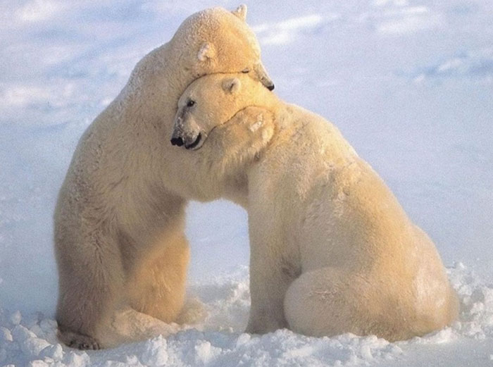 hugging_animals_20