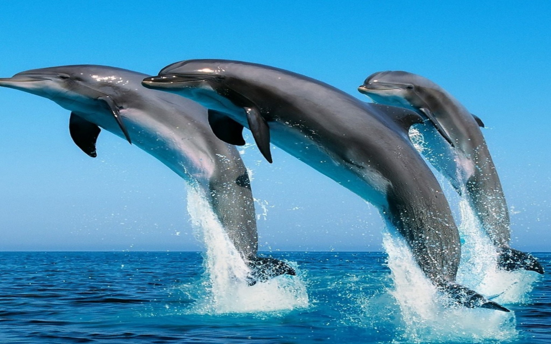 Animated Dolphins Images Dolphins Animal Information