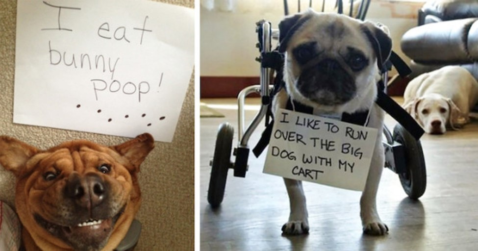 Dogs In Trouble 25 Hilarious Pictures Of Dog Shaming 16