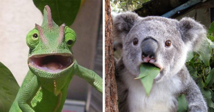 these 20 pictures of animals getting caught by surprise