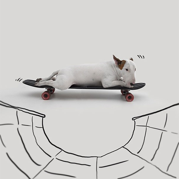 Jimmy-the-Bull-Terrier18__605