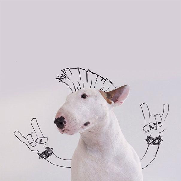 Jimmy-the-Bull-Terrier2__605