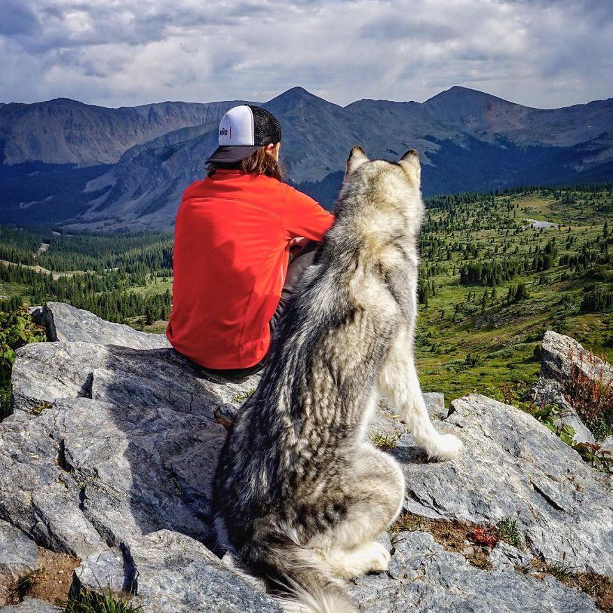 Loki-the-Wolfdog31__880
