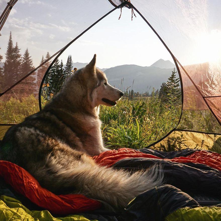Loki-the-Wolfdog50__880