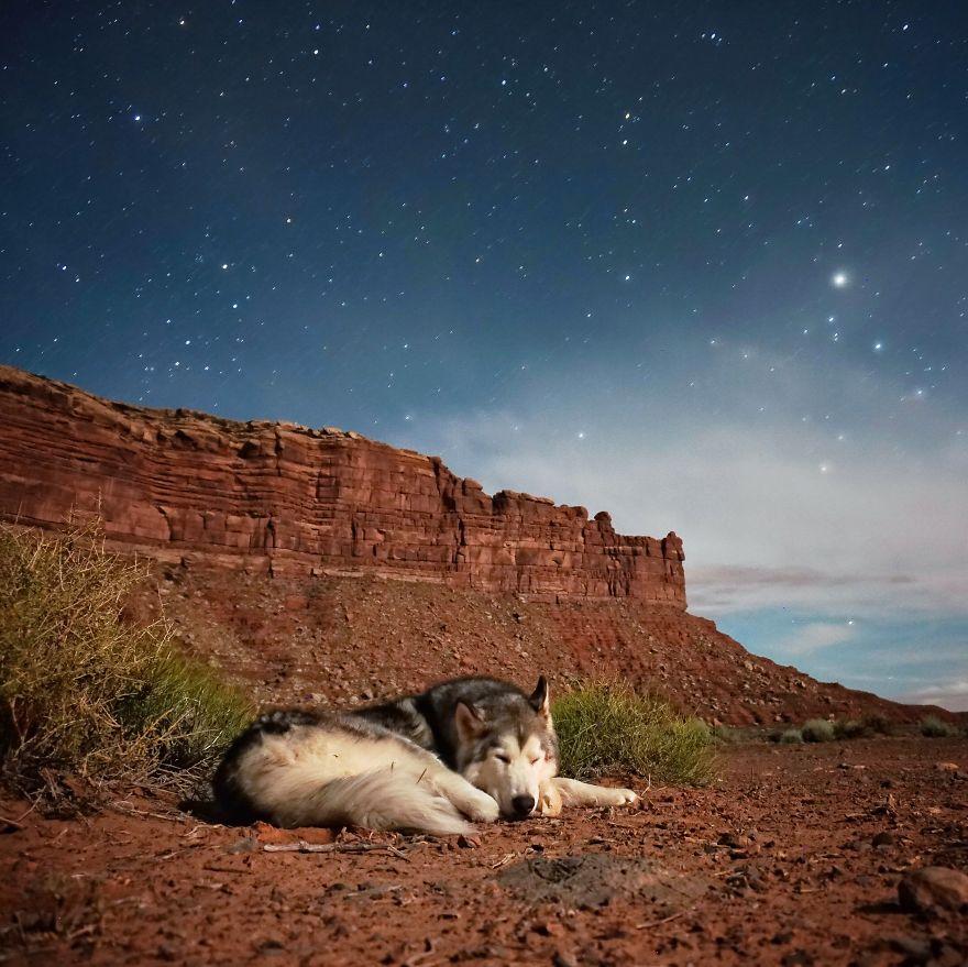 Loki-the-Wolfdog__880