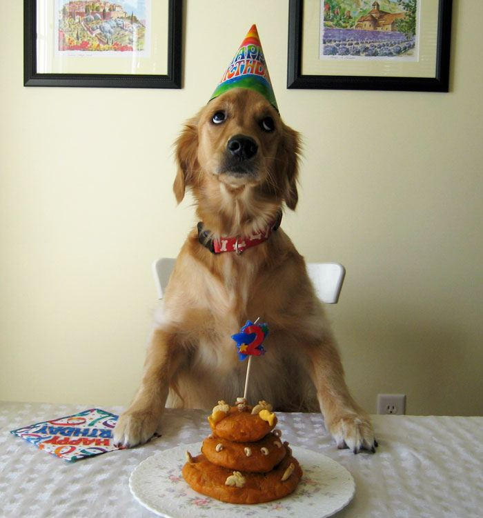 pets-that-have-better-birthday-parties-than-you-10