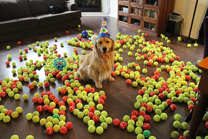 pets-that-have-better-birthday-parties-than-you-12