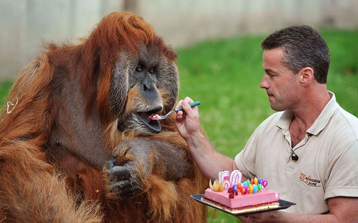 pets-that-have-better-birthday-parties-than-you-13