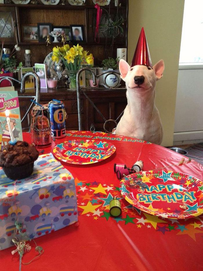 pets-that-have-better-birthday-parties-than-you-14