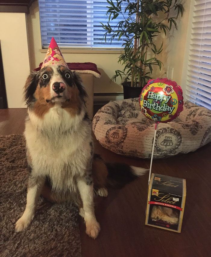 pets-that-have-better-birthday-parties-than-you-17