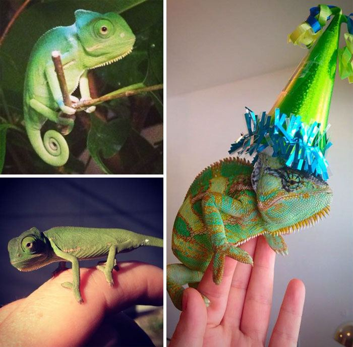 pets-that-have-better-birthday-parties-than-you-18