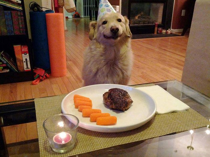 pets-that-have-better-birthday-parties-than-you-2