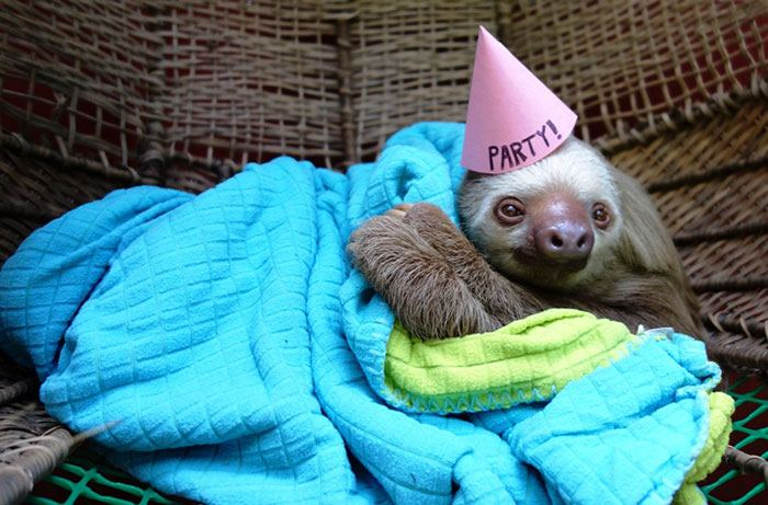 pets-that-have-better-birthday-parties-than-you-20