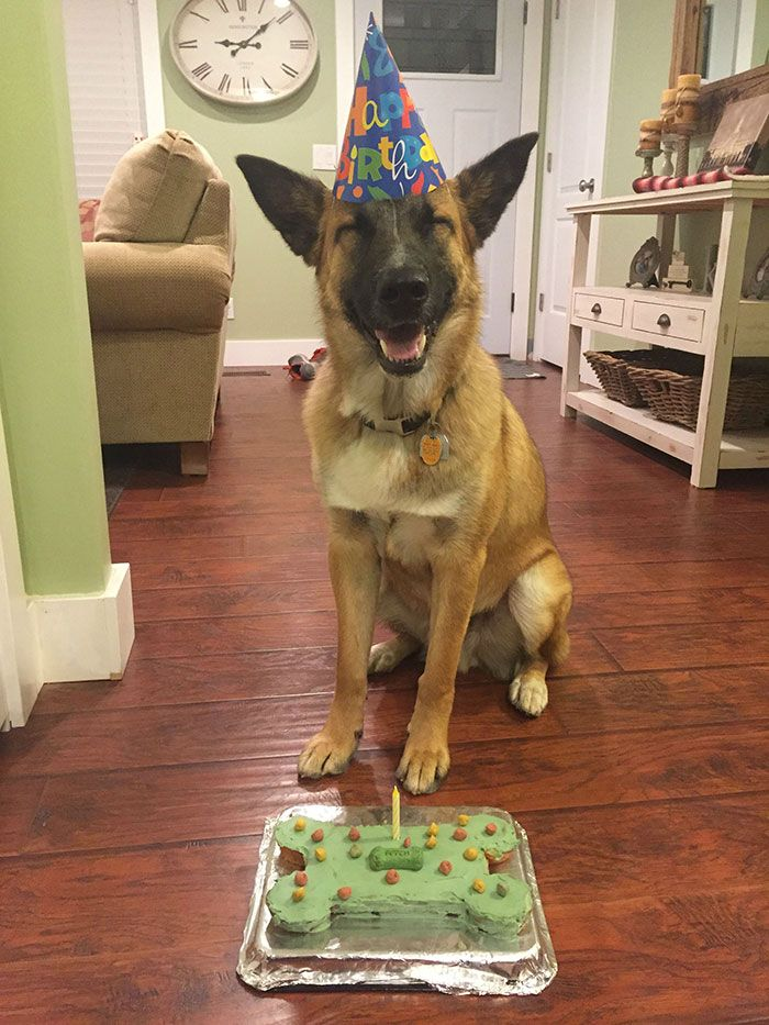 pets-that-have-better-birthday-parties-than-you-3