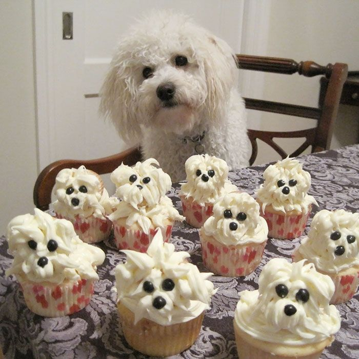 pets-that-have-better-birthday-parties-than-you-4
