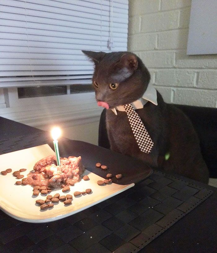 pets-that-have-better-birthday-parties-than-you-6