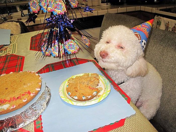 pets-that-have-better-birthday-parties-than-you-7
