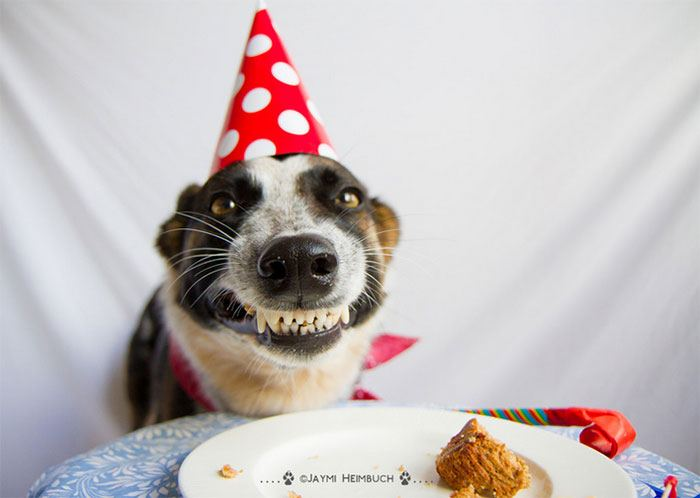 pets-that-have-better-birthday-parties-than-you-9