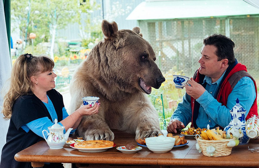 adopted-bear-russian-family-stepan-a20