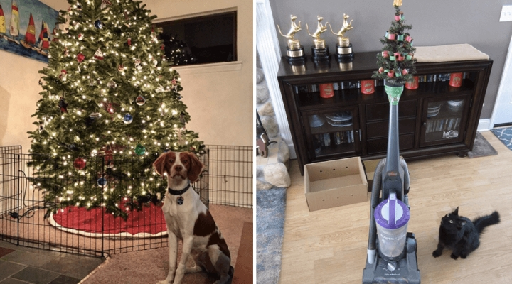 15 People Who Do Anything To Protect Their Christmas Trees